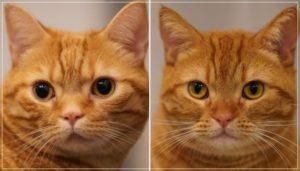 花江夏樹の猫